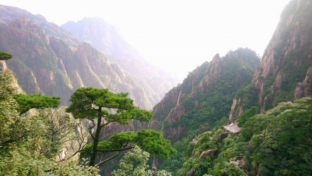 pine tree yellow mountains